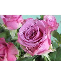 Rose C99